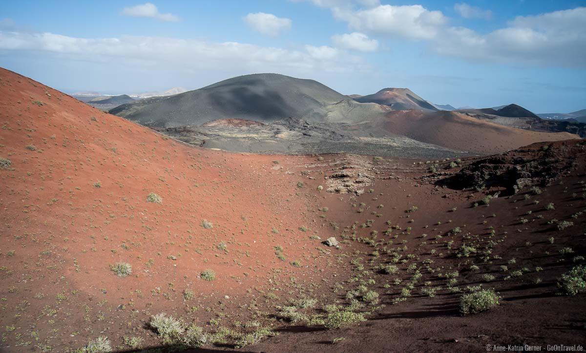 Fast 200 Flechtenarten wachsen auf vulkanischem Boden