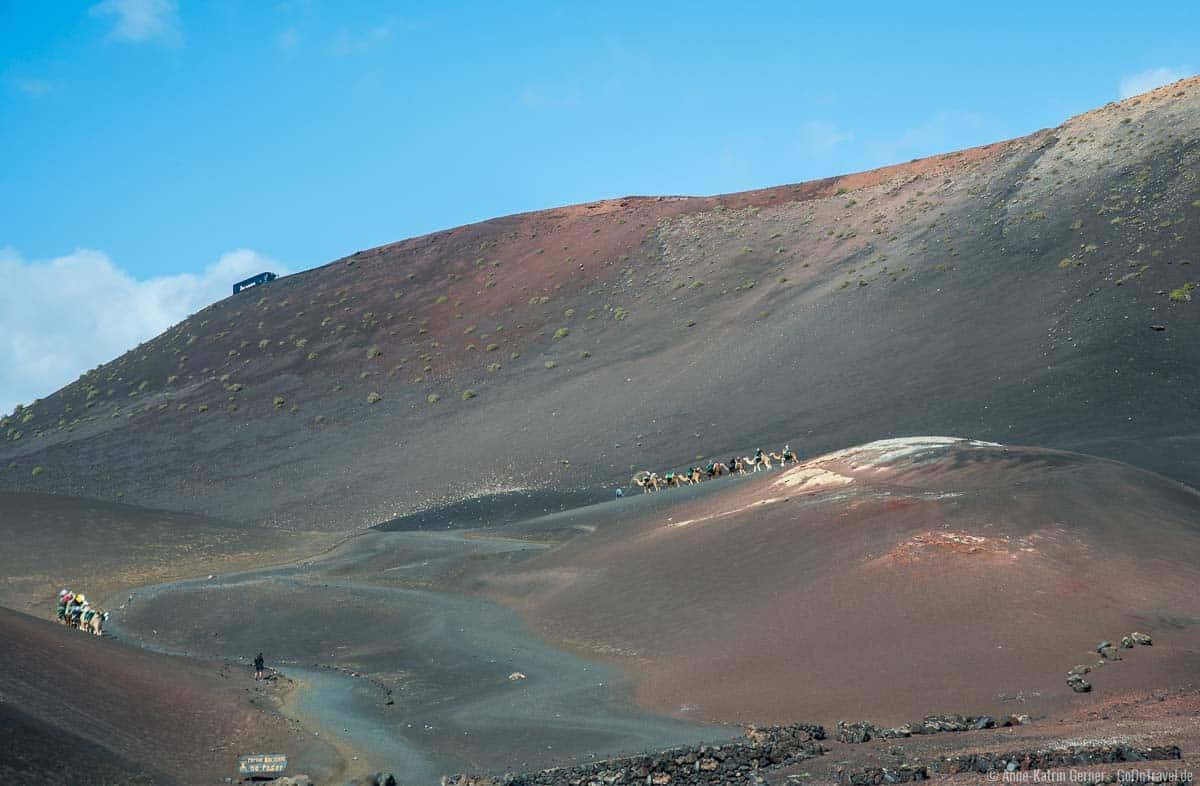 Der Kamelritt ist auf Lanzarote leider sehr beliebt.