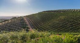 Südafrikanische Weine: Weinprobe im Kap Weinland