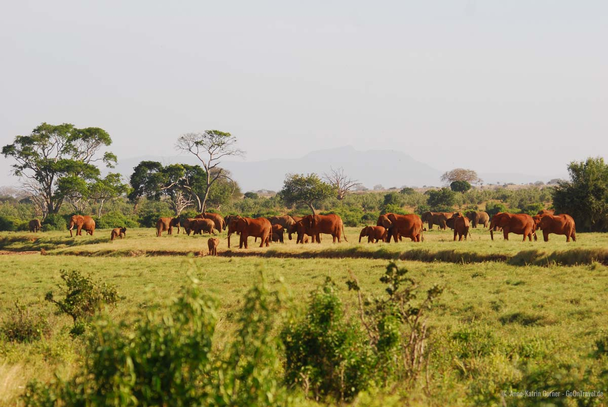 """typisches Bild im Tsavo Ost - eine Herde """"roter"""" Elefanten"""