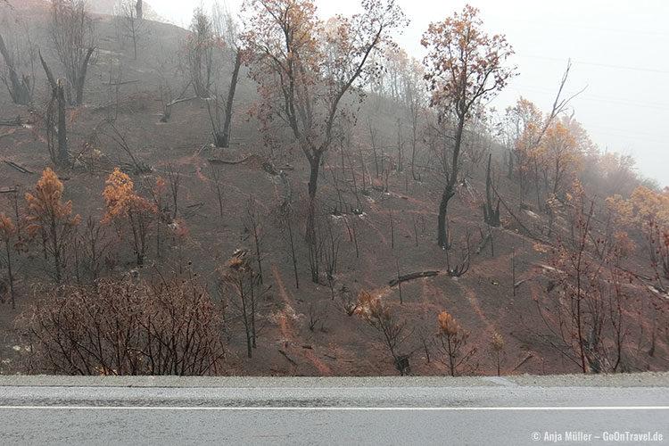 Verbrannter Wald am und auch im Yosemite National Park