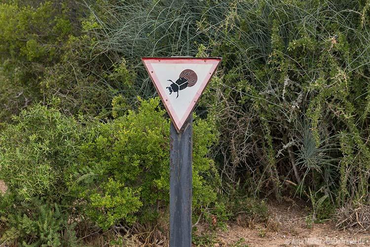 Vorsicht Dungbeetle (gefunden im Addo Elephant Nationalpark)