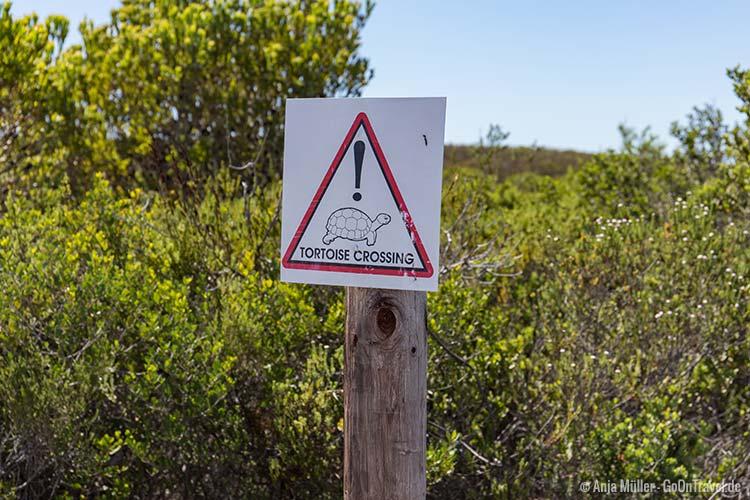 Schildkröten könnten den weg kreuzen (gefunden im De Hoop Nature Reserve)
