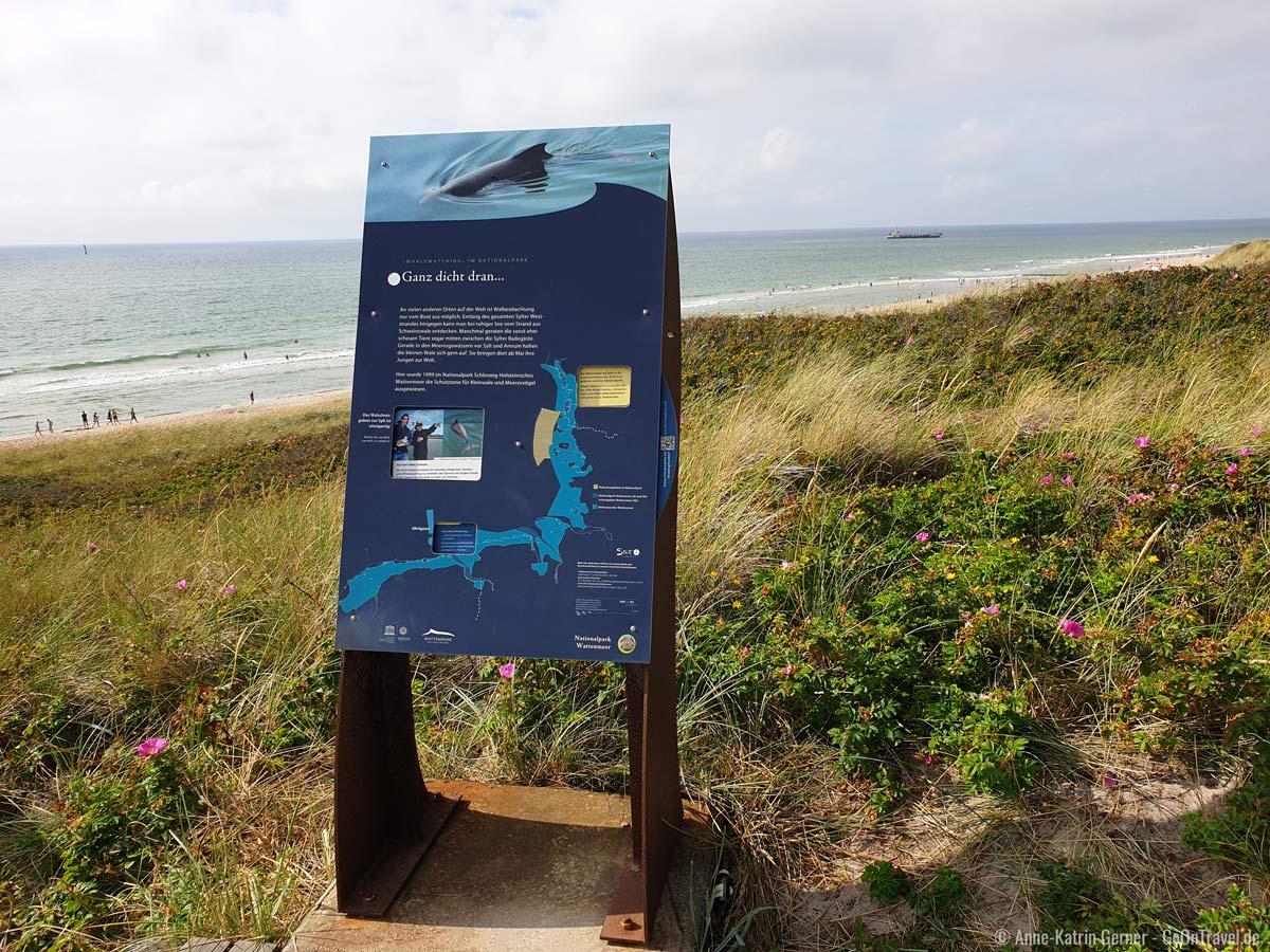 Infotafel zu Walbeobachtung am Sylter Strand