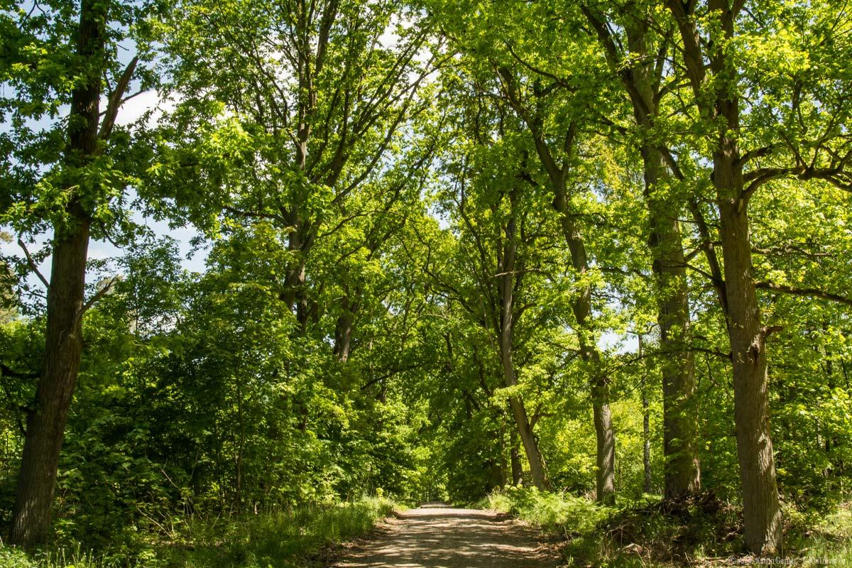 Waldweg durch die Schorfheide