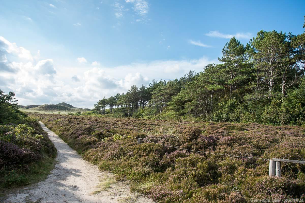 Heideweg zwischen dem Sylter Sagenwald