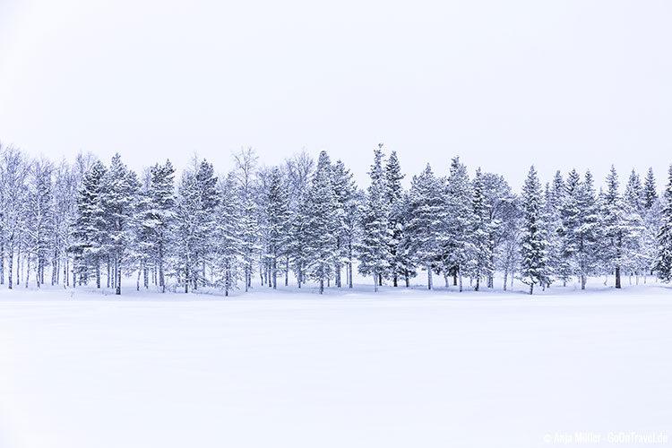 Winterwald in Schweden