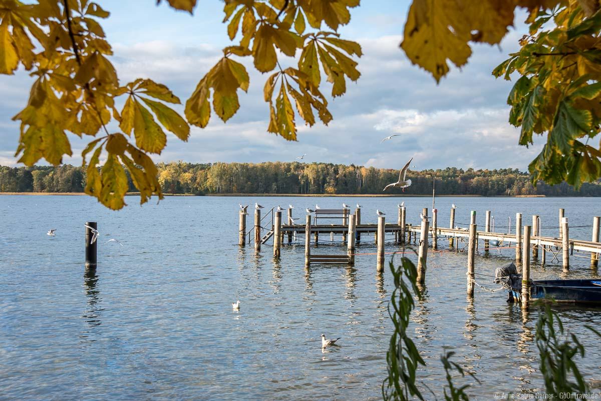 Der Werbellinsee ist einer von 240 Seen im Schutzgebiet