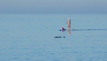 Whale Watching Sylt – Schweinswale vor der Insel Sylt beobachten