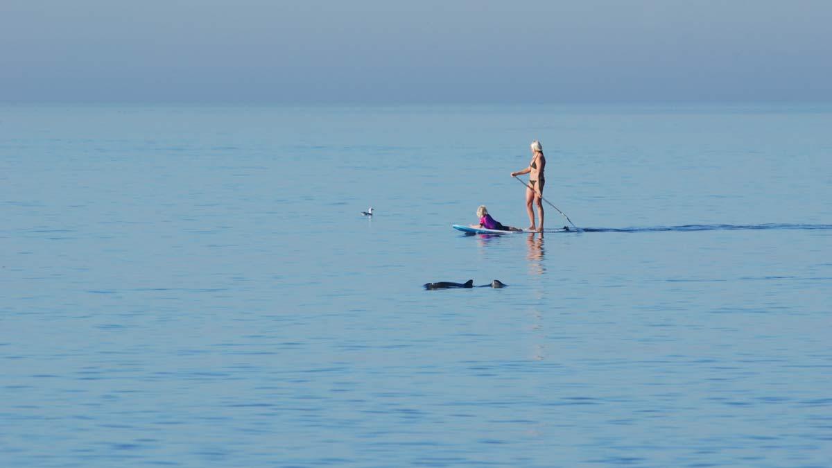 Whale Watching Sylt - Schweinswale vor der Insel Sylt beobachten | GoOnTravel.de - Folge deinem Fernweh