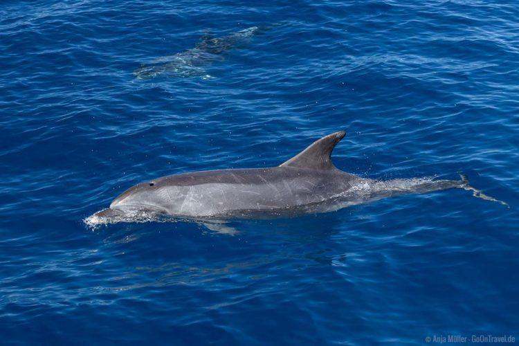 Ein Delfin direkt neben dem Boot