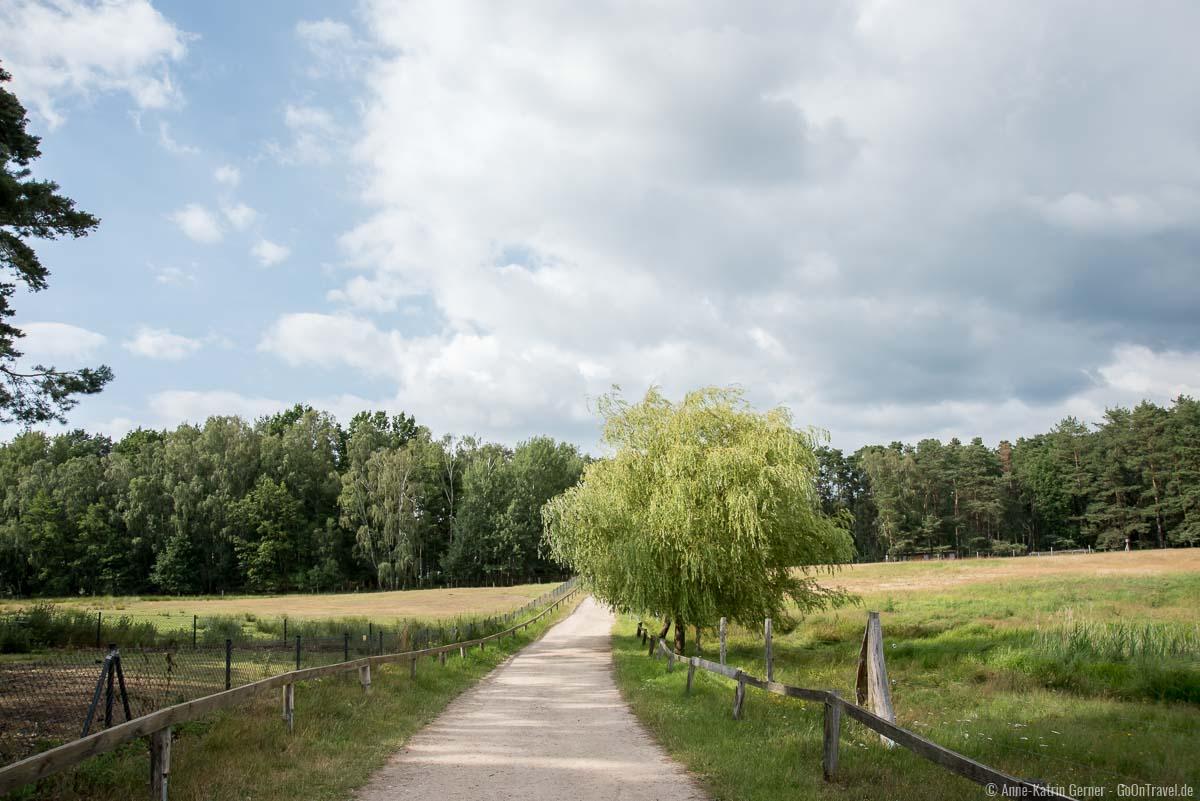 Besucherweg durch den Wildpark