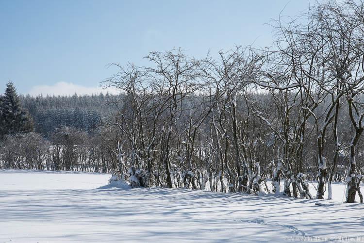 der Winter in den Ardennen von seiner schönsten Seite