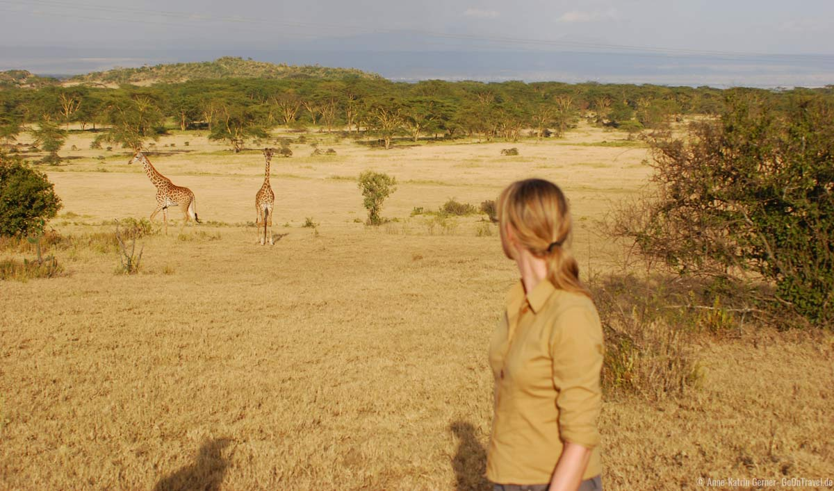 gut getarnt auf einem Bush walk mit Giraffen