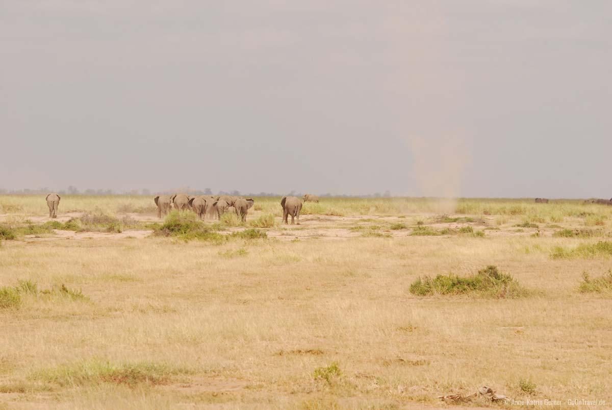 """""""Dust devil"""" kommen häufig vor in der Trockenzeit in Amboseli"""