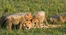 Fotografieren auf Safari: Ausrüstung, Pflege, Tipps für Einsteiger