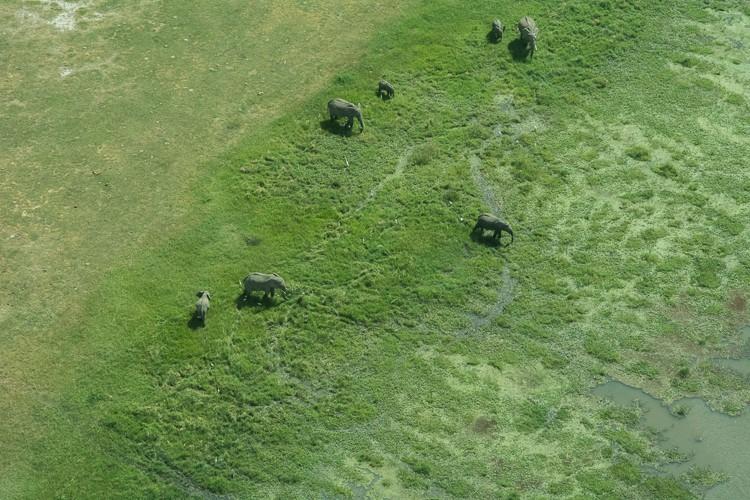 Nur Fliegen ist schöner - Elefanten von oben im Amboseli NP