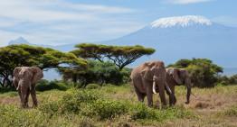 Safari-Abenteuer richtig planen