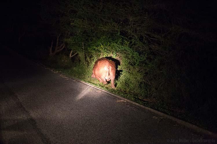 Ein Hippo am Straßenrand